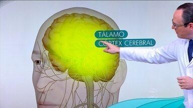 Manifestação da dor varia de acordo com o sexo e com a cultura - O neurologista Tarso Adoni explica que a dor é percebida em nervos periféricos. O estímulo segue até a medula espinhal e, depois, até o tálamo. O córtex cerebral determina como vamos reagir.