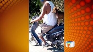 Motociclista é flagrado com cachorro em garupa em Caraguá - Flagrante foi na estrada do Rio Claro, região sul da cidade.