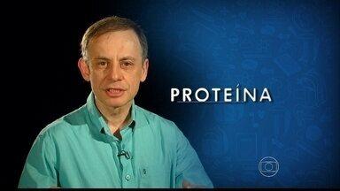 Professor explica funções da proteína no organismo - Reportagem de biologia é do Projeto Educação.
