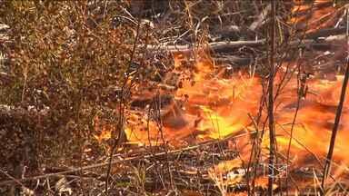 Fazenda em São Raimundo das Mangabeiras (MA) é destruída por incêndio - Setecentos hectares de uma fazenda em São Raimundo das Mangabeiras (MA), na região sul do Estado, foram destruídos pelo fogo. O fogo que começou na vegetação também atingiu uma plantação de eucalipto. O vento e o tempo seco prejudicaram o trabalho do Corpo de Bombeiros para tentar conter as chamas.