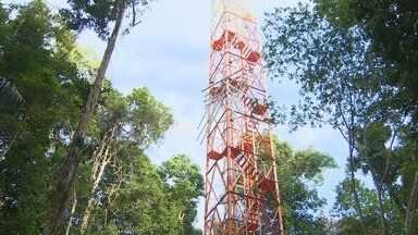 Torre de pesquisa mais alta do mundo é inaugurada no Amazonas - Torre tem 325m e vai coletar informações sobre a atmosfera e a floresta.Segundo ministro, custo operacional por ano chegará a R$ 2 milhões.