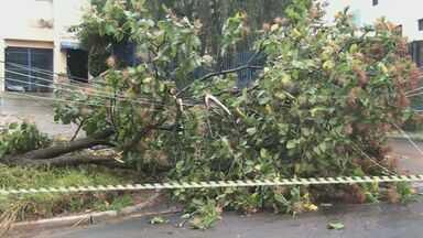 Forte chuva durante a madrugada provoca estragos na região de São Carlos - Em São Carlos, quatro árvores caíram e uma delas em cima da fiação elétrica, por pouco o poste não caiu junto.