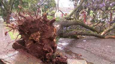 Temporal derruba árvores em Maringá - Algumas caíram sobre casas, carros e interditaram ruas