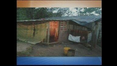 PM detém tinha de galos no interior de Chapecó - PM detém tinha de galos no interior de Chapecó