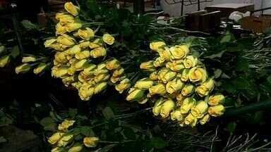 Sem chuvas, setor de floricultura passa por crise - Ceará vive cenário de estiagem há quatro anos.