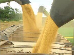 Produção tocantinense de grãos deve bater recorde este ano - Produção tocantinense de grãos deve bater recorde este ano