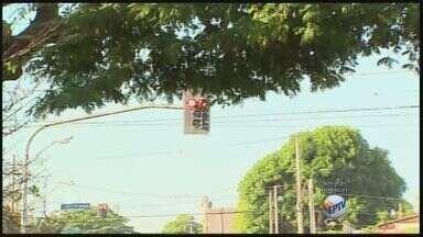 Motoristas pedem poda de árvores na Avenida Presidente Vargas, em Ribeirão Preto - Prefeitura informou que nesta semana está sendo feita a pode de árvores no bairro Jardim Sumaré e que nesta quinta-feira (24) uma equipe foi ao local para verificar o problema.