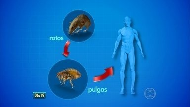 Transmissor da peste bubônica, o rato ainda assusta por causa da leptospirose - Peste bubônica chegou a matar 1/4 da população da Europa no passado. É a dica de biologia.