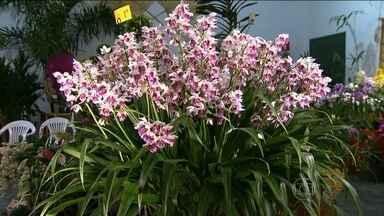 Exposição reúne 1,5 mil orquídeas de colecionadores em Embu das Artes - Na exposição, que é uma boa oportunidade para enfeitar o final de semana e homenagear a primavera, produtores também oferecem as flores a preços acessíveis.