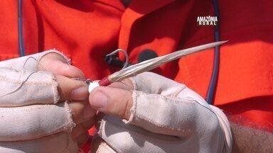 Pesca Legal: Zenizir ensina a usar isca artificial jig - O jig é que um anzol com uma cabeça de chumbo enfeitado por uma pena, pelo ou material sintético.