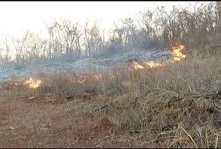 Focos de incêndio aumentam neste período do ano no Norte de Minas - Em Japonvar, muitos pequizeiros foram destruídos pelas chamas.