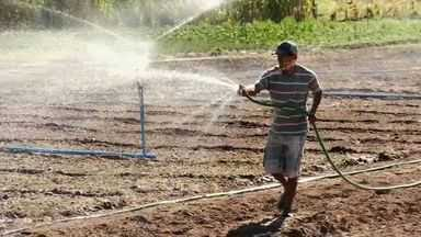 Produção rural com partilha entre produtor e dono da terra garante renda no Cariri - NE Rural visita produtores que trabalham em regime de comodato.