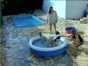 Veja dicas de como cuidar dos cachorros durante o calor - Animais precisam de cuidados especiais nessa época do ano.