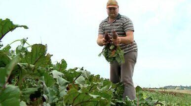 Excesso de chuvas prejufdica atividade de hortigranjeiros - Assista ao vídeo.