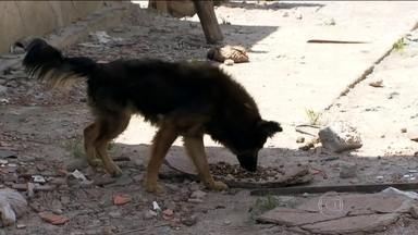 Após reintegração de posse, mais de 200 cães e gatos são deixados pra trás em Santo André - Um problema de saúde pública em Santo André, no ABC.Depois da reintegração de posse de uma área invadida ilegalmente, centenas de cães e gatos foram deixados pra trás.