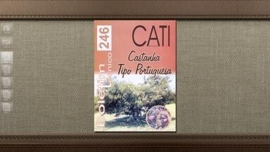 Folheto da Cati explica tudo sobre a produção de castanhas - Custa R$ 8, sem as despesas de correio.