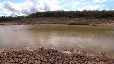 Seca prejudica agropecuária no Norte de Minas Gerais - Criação está sem água e comida