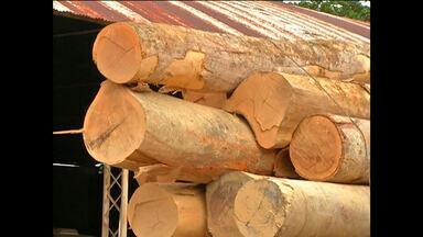 Ibama apreende 23m³ de madeira ilegal em assentamento - Fiscalização ocorreu no Corta Corda que fica na Rodovia Curuá-Una.