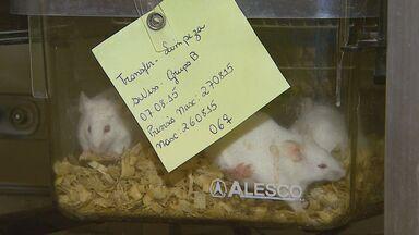 USP inaugura banco de embriões para pesquisa em Ribeirão Preto, SP - Banco vai reduzir o número de animais que são usados no trabalho dos pesquisadores.