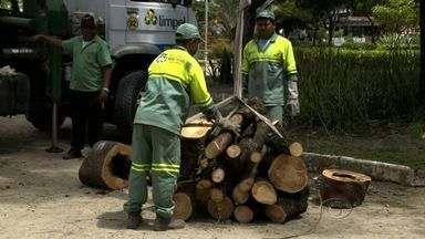 Sempma começa tratamento nas árvores da Av. Durval de Góes Monteiro e Praça Centenário - Segundo a secretaria, pode haver poda ou derrubamento das árvores.