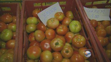 Aumenta o preço do tomate na região de Campinas - Uma colheita em Sumaré foi atingida por uma chuva de granizo no fim do mês passado, o que contribuiu para o aumento.