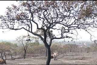 Bombeiros e brigadistas estão há 4 dias tentando conter chamas no Parque da Lapa Grande - Mais de 100 pesspas estão envolvidas no trabalho.