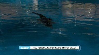 Jacaré invade piscina de Mister Brau; reveja! - Vídeo Show mostra imagem de animal encalhado em praia