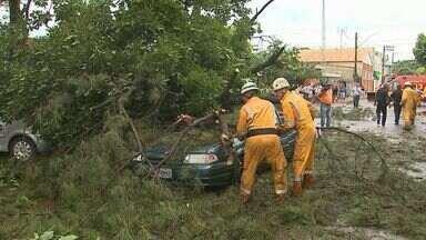 Trabalhador rural morre em acidente durante temporal em Pontal, SP - Vítima de 33 anos foi atingida por um contêiner na zona rural. Chuva derrubou árvores e causou pontos de alagamento na cidade.