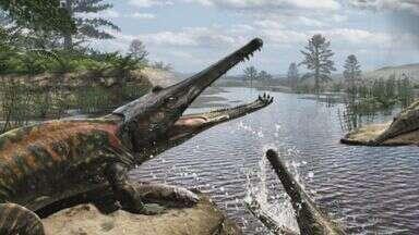 Pesquisadores da USP de Ribeirão Preto estudam lagarto do sul - Já foram descobertas novas características do animal através dos ossos. Crocodilo viveu no Brasil há 270 milhões de anos.
