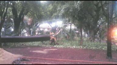 Chuva derruba árvore sobre quiosque no Centro de Ribeirão Preto, SP - Árvore de 10 metros caiu na Praça XV, entre as Ruas Tibiriçá e General Osório.