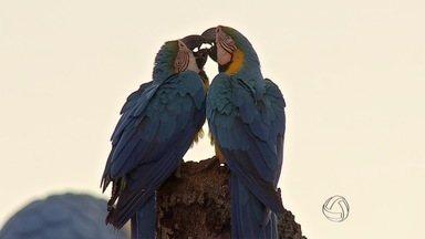 Simpósio reúne pesquisadores, estudantes e profissionais ligados à conservação de aves - O simpósio internacional levantou temas como saúde, genética e reintrodução de espécies na natureza.