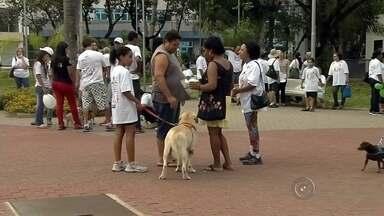 Moradores participam de caminhada em defesa dos animais em Araçatuba - Em Araçatuba (SP) moradores participaram de uma caminhada em defesa dos animais no fim de semana.