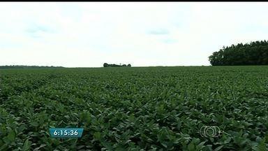 Chuva causa alívio para produtores de soja de Rio Verde - Alguns tiveram que interromper o plantio em outubro por causa da estiagem. O trabalho ficou parado por cerca de 20 dias.