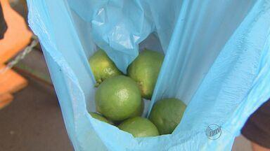 No período de safra, limão está mais barato na feira - Fruta era o vilão há duas semana e agora está mais em conta em Ribeirão Preto, SP