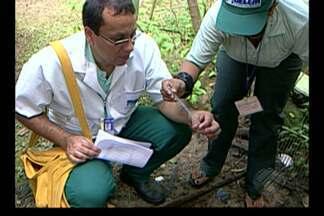 Sesma mapeia maiores focos de Aedes Aegypti - População usa repelentes para evitar aproximação de mosquitos.