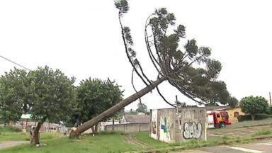 Bombeiros cortam araucária no Núcleo Rio Verde, em Ponta Grossa - Corte foi autorizado pelo Instituto Ambiental do Paraná, já que o pinheiro corria o risco de cair.