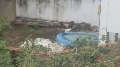 Telespectadores enviam imagens de possíveis focos de dengue no Sul de Minas - Telespectadores enviam imagens de possíveis focos de dengue no Sul de Minas