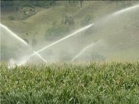 Estiagem provoca atraso no plantio de milho em Dionísio - Agricultores começam a traçar estratégias para que a produção no ano que vem seja melhor do que em 2015.