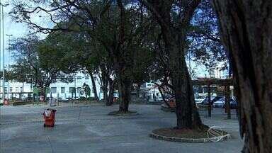 Número de árvores em Aracaju diminui - Número de árvores em Aracaju diminui.
