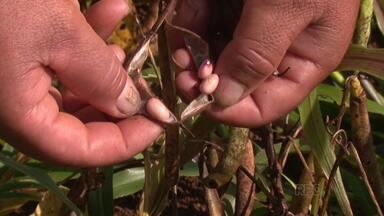 Prejuízo na lavoura provoca aumento em alguns produtos - O prejuízo é por causa das fortes chuvas dos últimos meses