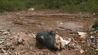 Habitação irregular e falta de fiscalização prejudicam manguezais de São Luís - Habitação irregular e falta de fiscalização prejudicam manguezais de São Luís