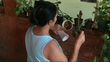 Agentes de Endemias fazem arrastão contra a dengue em Paranavaí - O bairro visitado foi o Jardim Morumbi que segundo o levantamento da Vigilância em Saúde do município está entre os locais com mais focos do mosquito Aedes Aegypti.