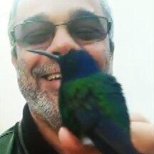 Beija-flor manso - Bombeiro aposentado filma no quintal um beija-flor que descansa na mão.