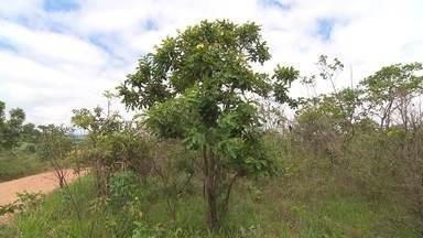 Reprise: Em Araxá, mateiros passam a gerções futuras tradições de plantas medicinais - Terra de Minas mostra trabalhos com plantas medicinais