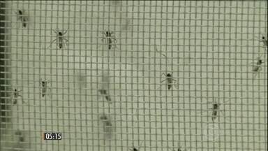 Governo pede ajuda das Forças Armadas pra combater o Zika Vírus - Objetivo é lutar contra o mosquito transmissor da doença do Aedes Aegypti.
