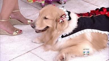 Blocão: Bloco de Carnaval reúne cães de diferentes raças - Cachorros fantasiados desfilam no palco do 'Encontro'