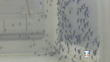 Militares vão fazer campanha contra Aedes Aegypti - Homens das três Forças Armadas vão distribuir panfletos e conscientizar a pessoas do perigo do mosquito