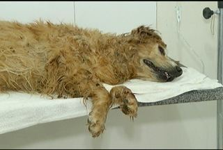 Cobra pica cadela de estimação em parque de Montes Claros - Acidente ocorreu próximo a um parquinho infantil.