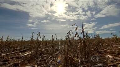 Perdas na produção da soja no MT chegam a um milhão de toneladas - Três cidades decretaram estado de emergência por quebra nas lavouras. Reflexos são sentidos em outros setores, como mercados e lojas.