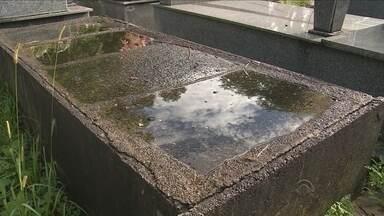 Animais mortos, túmulos abertos e água parada: cemitério do Itacorubi segue abandonado - Animais mortos, túmulos abertos e água parada: cemitério do Itacorubi segue em situação de abandono